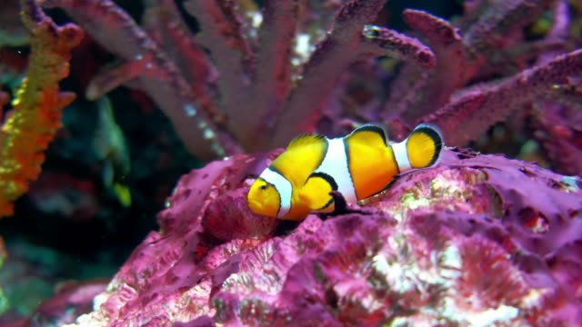 aquarium public with fishes and corals - tropical fish stock videos & royalty-free footage