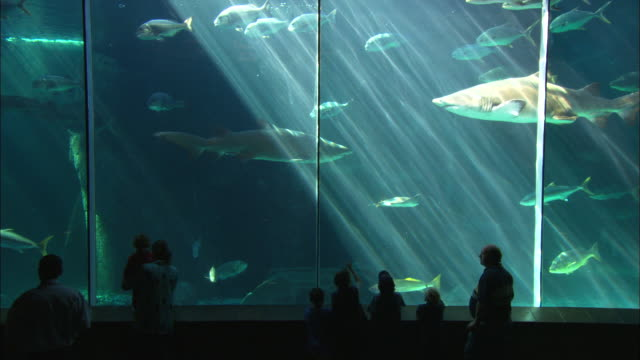 vidéos et rushes de aquarium shark tank, silhouette kids viewing, south africa  - aquarium établissement pour animaux en captivité
