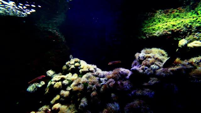 Aquarium-tank