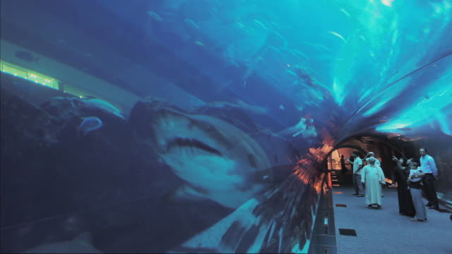 vídeos y material grabado en eventos de stock de ws aquarium tunnel at dubai mall with sharks / dubai, united arab emirates - dubái