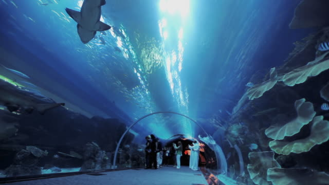 ws la aquarium tunnel at dubai mall with sharks / dubai, united arab emirates - 水族館点の映像素材/bロール