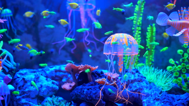 aquarium under ultraviolet uv light. - neon stock videos & royalty-free footage