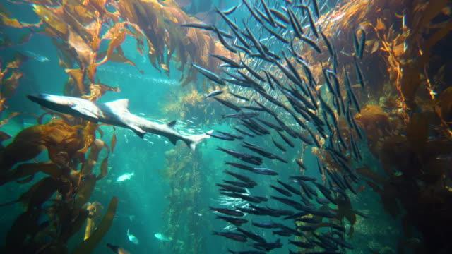aquarium - aquarium stock videos & royalty-free footage