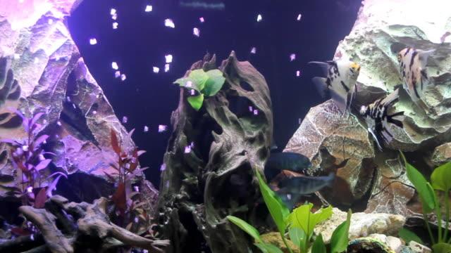Aquarium (HD)