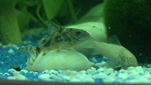 stockvideo's en b-roll-footage met aquarium - rugvin