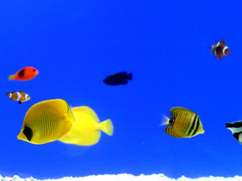 vídeos de stock, filmes e b-roll de aquário  - peixe tropical