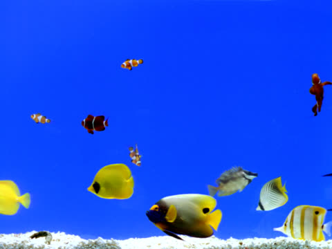 aquarium - tropical fish stock videos & royalty-free footage