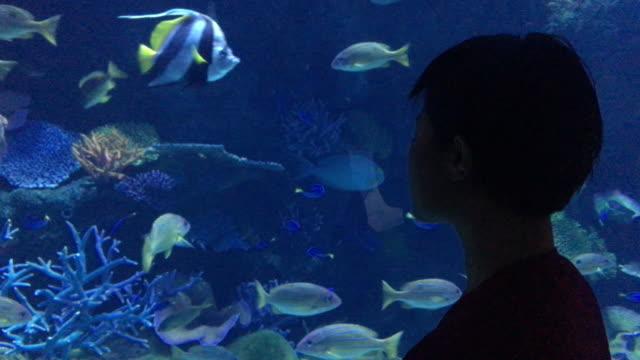 vídeos y material grabado en eventos de stock de acuario  - vehículo acorazado