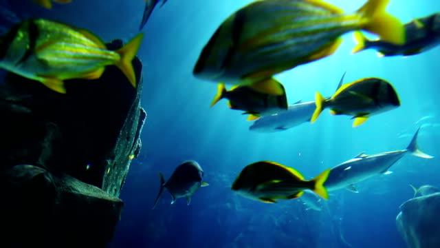 vídeos de stock, filmes e b-roll de aquário  - deep sea diving