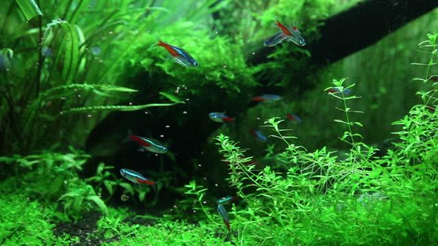 aquarium - aquarium stock videos and b-roll footage