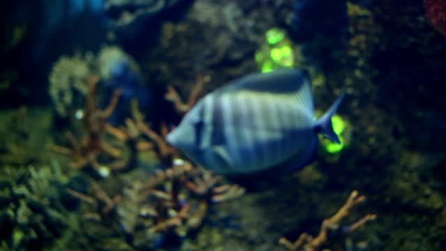 Aquarium mit tropischen Fischen, sea life, gefilmt in voll-HD