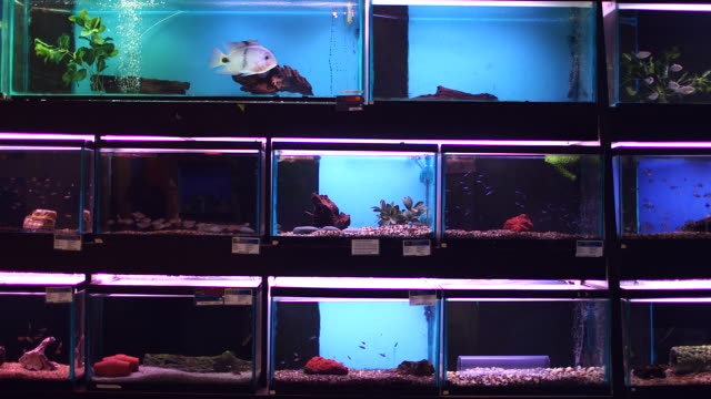 ws of aquariums with fishes in pet shop - petshop stock videos and b-roll footage
