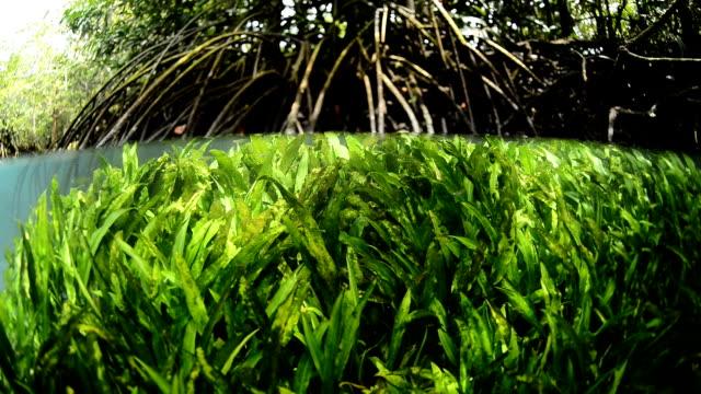 aquatic plant in tha pom, kribi, unseen thailand - aquatic plant stock videos & royalty-free footage