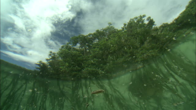 aquatic plants are seen in the shallow waters off the shore of palau. - shallow stock videos & royalty-free footage