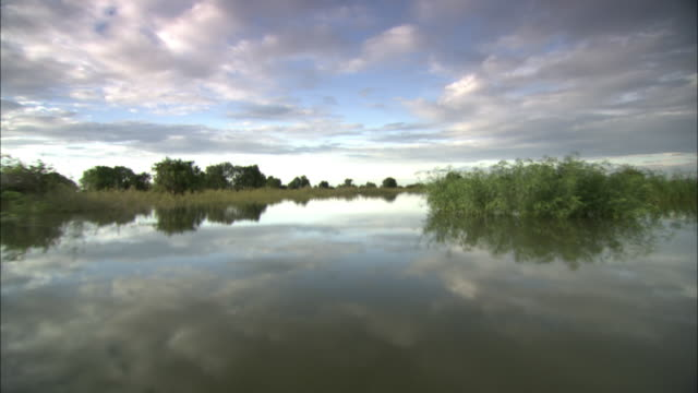 aquatic plants reflect on the surface of a swamp in cambodia. - boat point of view stock videos & royalty-free footage
