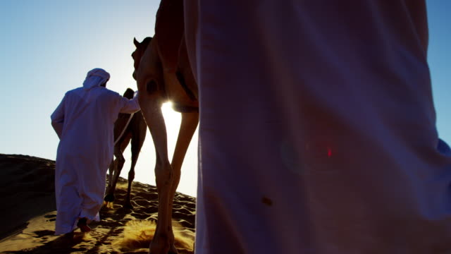 vídeos de stock, filmes e b-roll de arab bedouin males in traditional dress leading camels - adereço de cabeça
