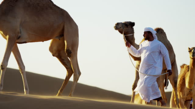 arab bedouin males in traditional dress leading camels - camel train stock videos & royalty-free footage