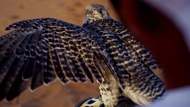 vídeos y material grabado en eventos de stock de arab falconer in desert with bird of prey - halcón