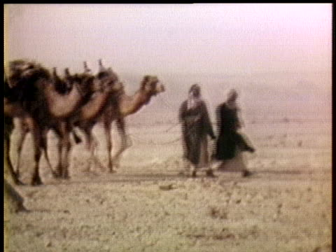 arab men lead camels across the israeli occupied area of sinai. - camel stock videos & royalty-free footage