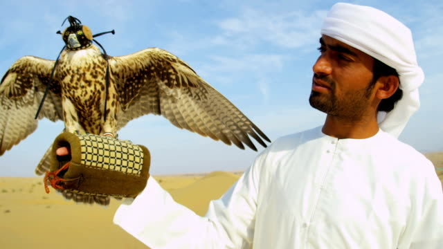 arabic male traditional dress displaying peregrine falcon uae - perching stock videos & royalty-free footage