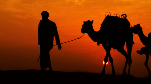 arabic male walking camels through desert sunset silhouette - camel stock videos & royalty-free footage
