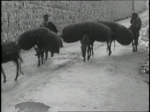 Arabs walk mules through the desert carrying large sacks