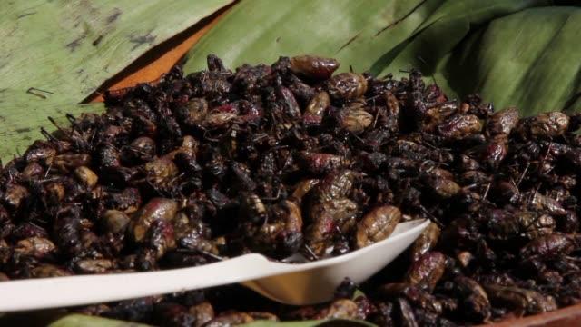 stockvideo's en b-roll-footage met aranas fritas, grillos a la plancha y mijo, algunas de las exquisiteces de la apartada region del noreste de india, donde consideran que la dieta se... - agricultura