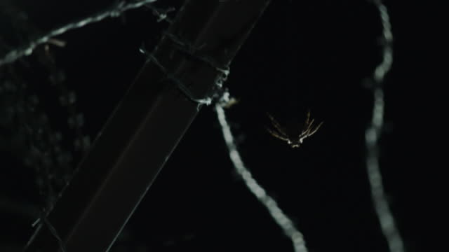 araneidae spider hanging down from barbed wire fence in the dmz (demilitarized zone between south and north korea), goseong-gun - rete metallica filo metallico video stock e b–roll
