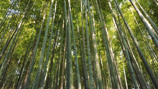 京都の嵐山竹林 - 竹点の映像素材/bロール