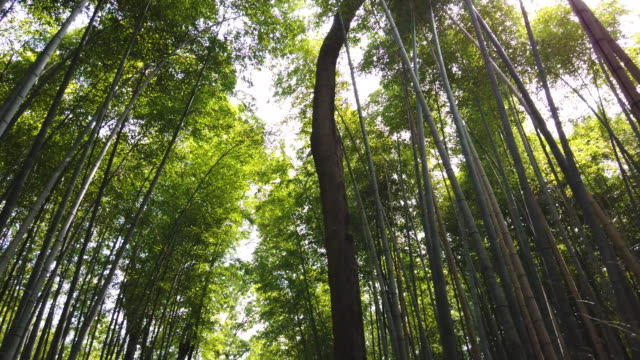arashiyama bamboo forest in kyoto, japan - kyoto prefecture stock videos & royalty-free footage