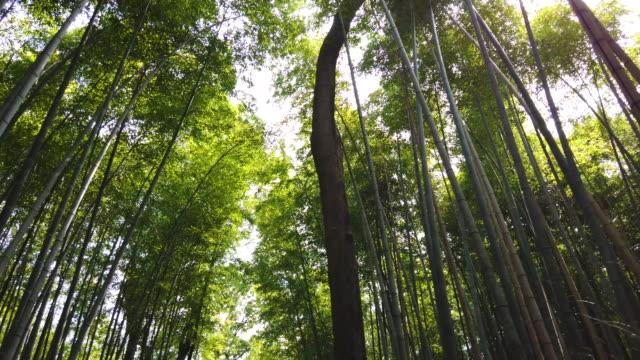 arashiyama bamboo forest in kyoto, japan - bamboo plant stock videos & royalty-free footage