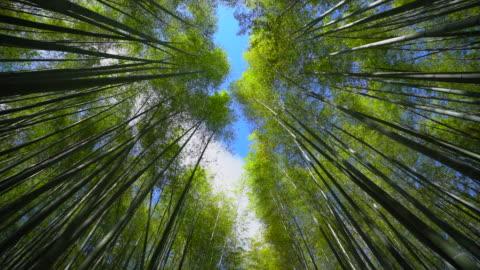 vídeos y material grabado en eventos de stock de bosque de bambú arashiyama, kyoto japan - alto descripción física