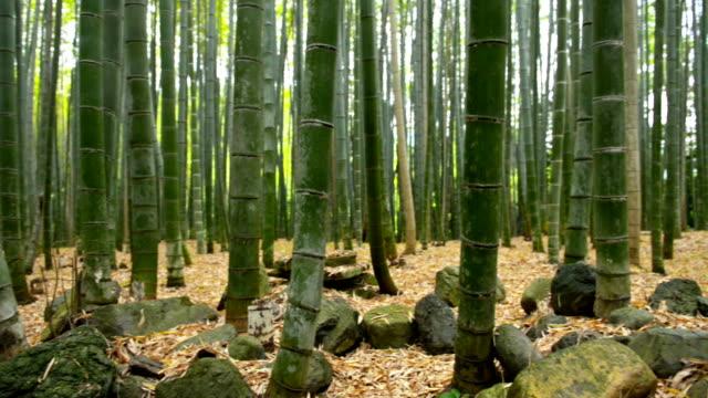 arashiyama bamboo forest, kyoto, japan - bamboo plant stock videos and b-roll footage
