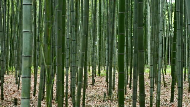 vídeos de stock e filmes b-roll de arashiyama floresta de bambu, em kyoto, japão - bambu material