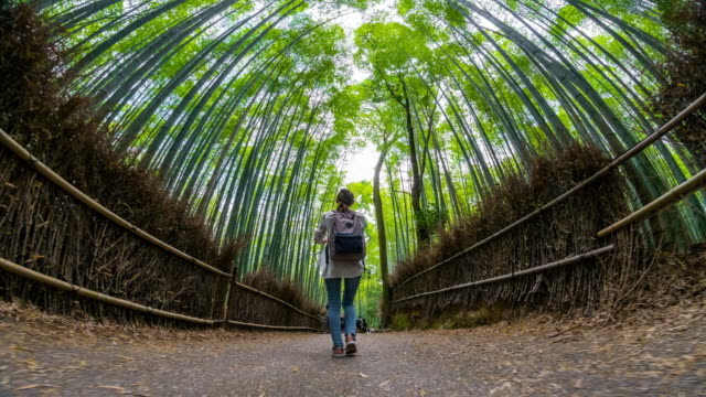 arashiyama bamboo grove hyperlapse in kyoto 4k - hyper lapse stock videos & royalty-free footage