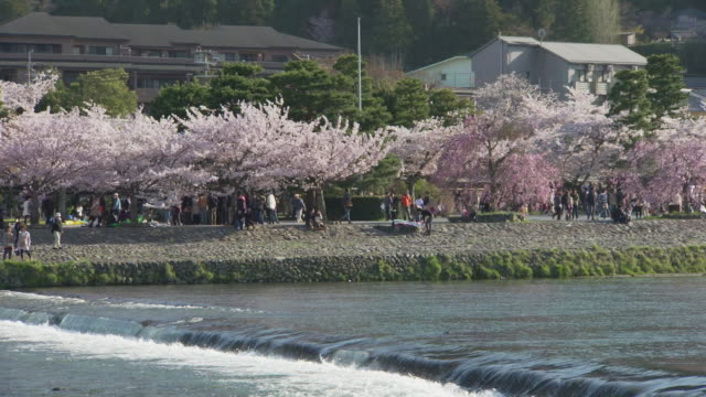 arashiyama park with cherry blossoms in kyoto - 1 minute or greater stock videos & royalty-free footage