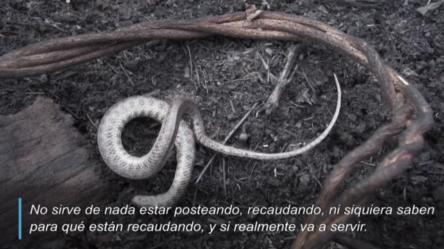 arboles secos animales calcinados y desolacion reinan en el parque nacional otuquis en el pantanal boliviano tras los incendios que arrasaron con... - parque nacional stock videos & royalty-free footage