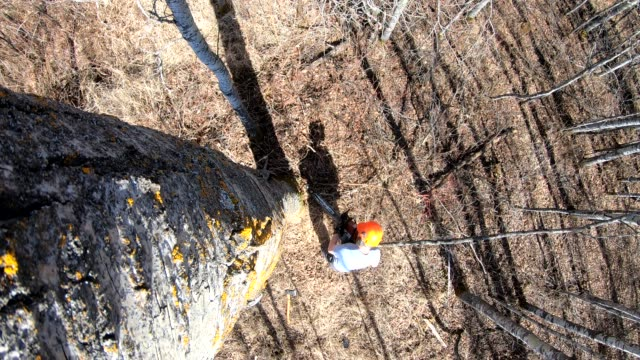 arborist tree felling - 木材産業点の映像素材/bロール