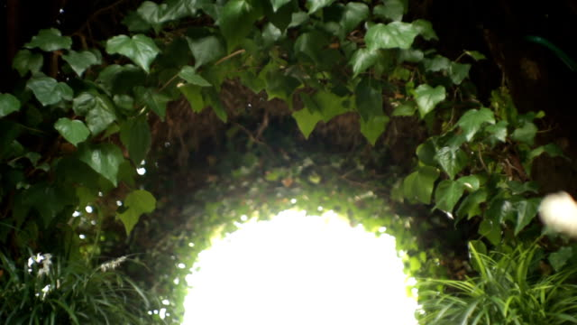 Arch covered with ivy