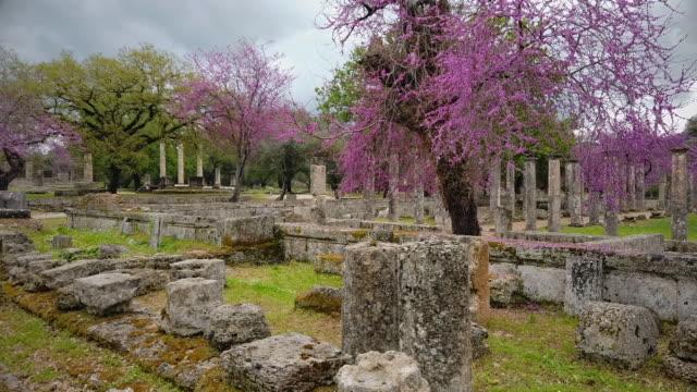 vídeos y material grabado en eventos de stock de sitio arqueológico de la antigua olimpia, ruinas de palaestra en olympia y árbol de judas ( cercis siliquastrum ), peloponnes, grecia - judas