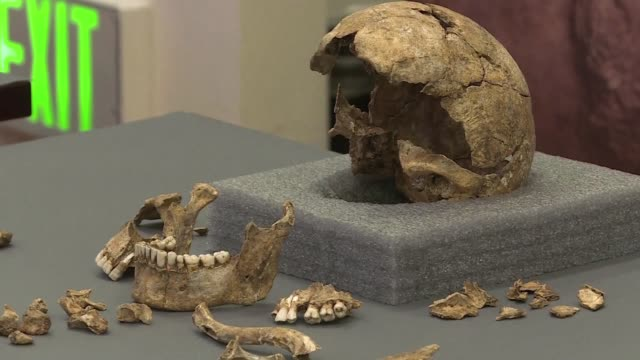 vídeos de stock e filmes b-roll de archaeologists revealed tuesday that skeletons found buried at the 1608 jamestown church in virginia were likely the remains of four leaders of the... - jamestown virginia