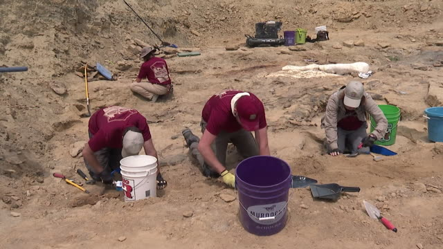 archaeologists working at dig site in wyoming, dubbed mission jurassic, excavating dinosaur bones - digging stock-videos und b-roll-filmmaterial