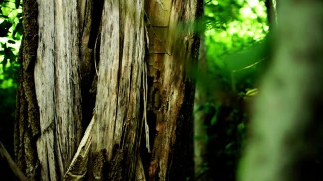 Archery - Arrow Hitting Tree