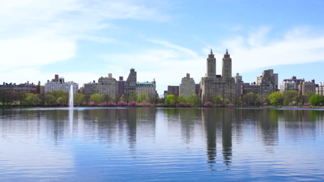 architectures of central park west historic district reflect to central park reservoir in new york. rows of cherry blossoms trees are full-bloomed, and fresh green leaves are growing in springtime. - central park reservoir stock videos and b-roll footage