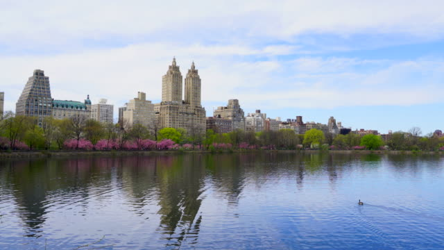 architectures of central park west historic district reflect to central park reservoir in new york.  a duck swims on reflection of architectures of central park west historic district at reservoir. - central park reservoir stock videos and b-roll footage
