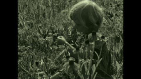 vidéos et rushes de archival film of brown eyed susan flowers. - une seule petite fille