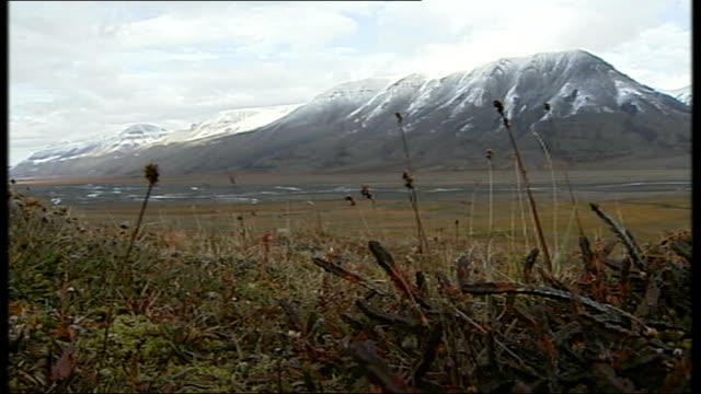 Svalbard Spitsbergen EXT Landscape with icecapped mountains and empty tundra in foreground Hardy Arctic plants growing in tundra Mountain ranges road...
