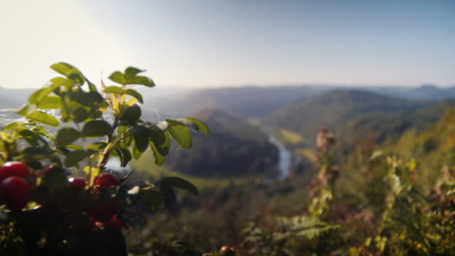 stockvideo's en b-roll-footage met ardennes belgium with meandering horsshoe river. camera focus pull and tracking. beautiful view over ardennes countryside. - toerisme