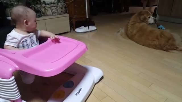are you looking for a way to tire out both your baby and your pup look no further this clip shows zoa a beautiful four year old golden retriever... - family with four children stock videos & royalty-free footage