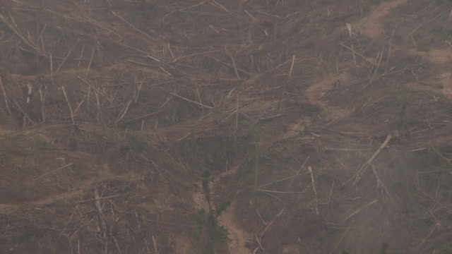 Area of felled rainforest trees, zoom out to fringe of forest and re-planted trees